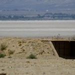 Coyote inspects the bunker